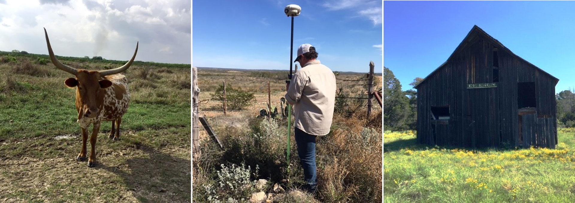 Texas longhorn, TX licensed land surveyor, Texas farm survey